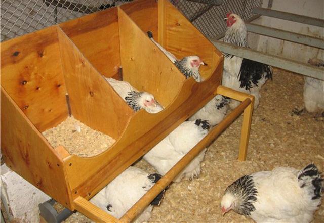 Обогрев для куриц